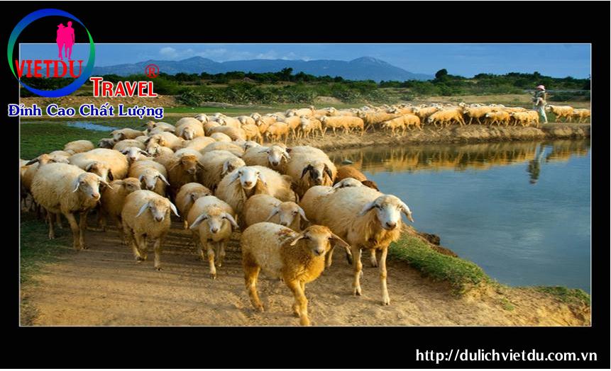 Tour Đồi Cừu Lagi 2 Ngày 1 Đêm