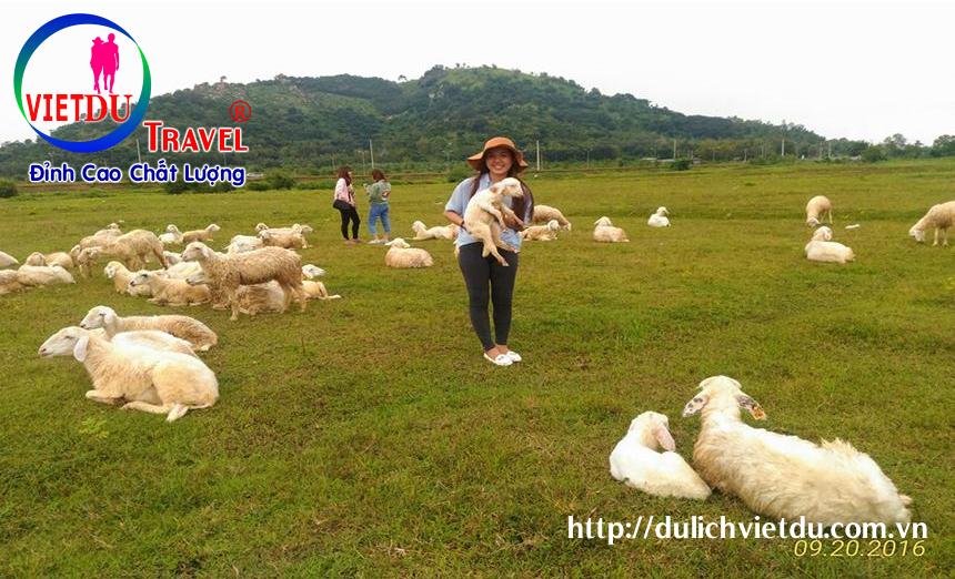 Tour Đồi Cừu Long Hải 2 ngày 1 đêm